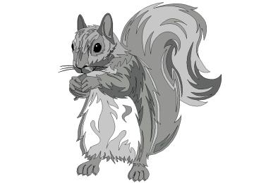 Window Color Malvorlagen Eichhörnchen
