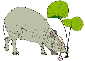 Malvorlagen Tiere Wildschwein