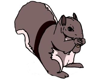 Ausmalbilder Tiere Eichhörnchen