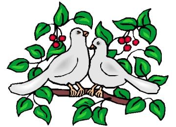 Tauben Ausmalbilder Für Erwachsene